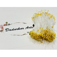 White with Yellow Micro Pollens Flower making Thread Pollens
